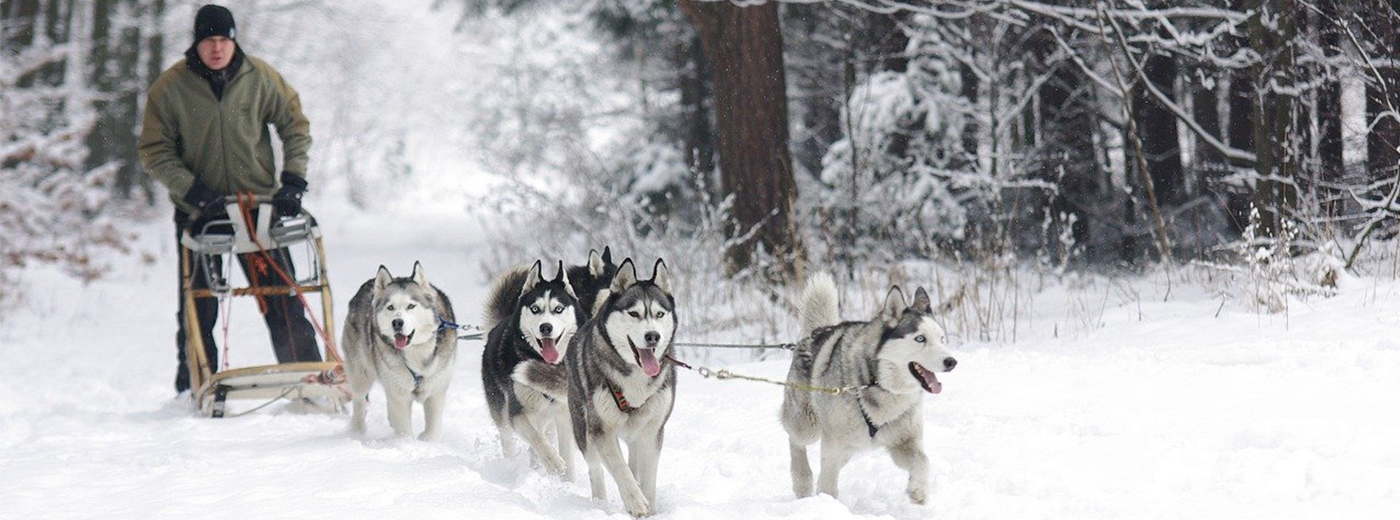 Sled pulled by huskies in Lithuania